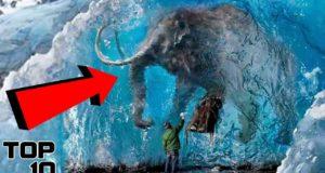 Top 10 Animals Frozen In Time 4