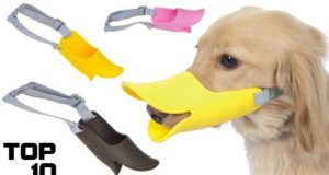 Top 10 Dumbest Inventions For Dogs 2