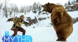 Top 5 Dangerous Animal Attack Myths 4
