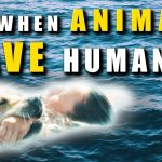 ANIMALS Saving HUMANS - FACT or FICTION? 6